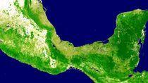 Mapa lesistości Meksyku wykonana przy użyciu Google Earth Engine.