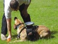 Pies-ratownik z GPS-em