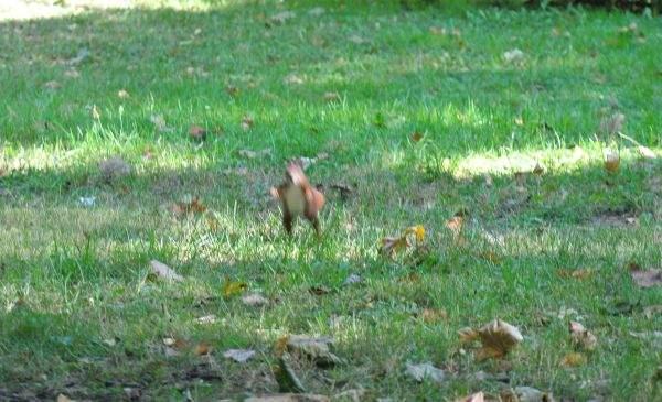 Wiewiórka 2
